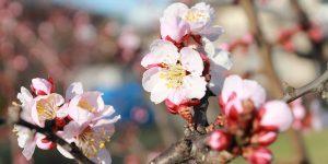 塩尻もそろそろ春到来!