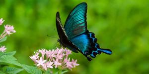 【8月2日−8月6日】『夏休み昆虫標本作り教室』が開催